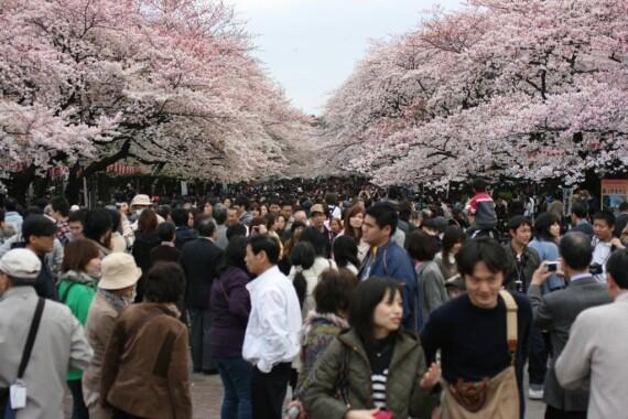 Aleja w Parku Ueno