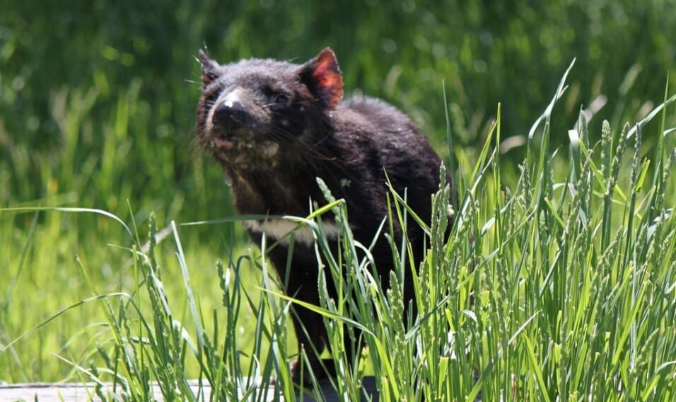 6 powodów, dla których warto pojechać na Tasmanię