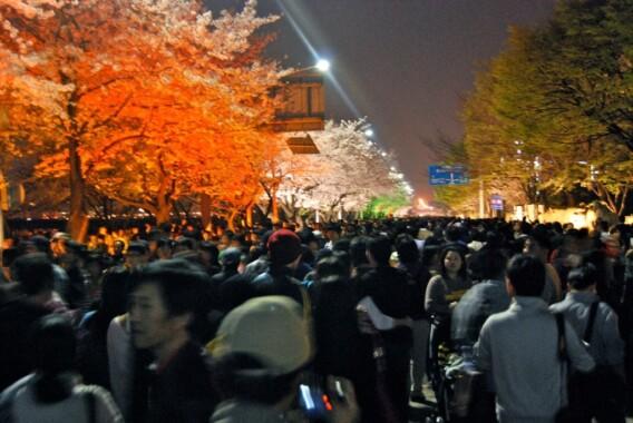 Festiwal Kwitnącej Wiśni – Yeouido, Seoul 2009