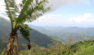 Góry Błękitne (Jamajka)