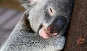 """9 rzeczy o Australii, które możesz uważać za """"najwspanialsze kłamstwa"""", a są prawdą"""