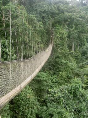 Most wiszący w Parku Narodowym Kakum