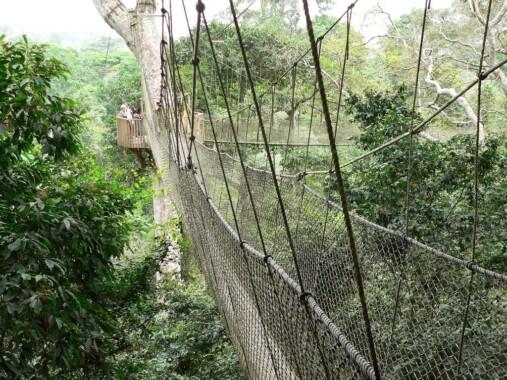 Most w Parku Narodowym Kakum