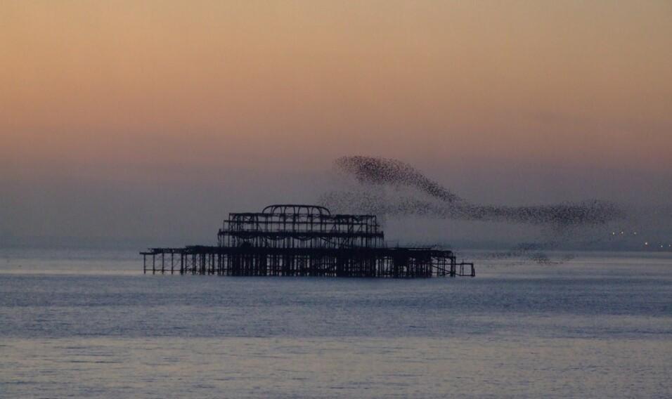 Odlatujące stado szpaków, Molo w Brighton, Anglia