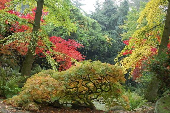 Ogród Japoński w Ogrodzie Dendrologicznym w Przelewicach
