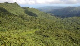 Park Narodowy El Yunque