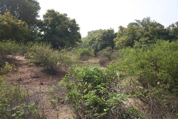 Park Narodowy Kaboré-Tambi