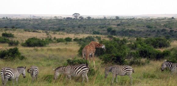 Zwierzęta w Parku Narodowym w Nairobi