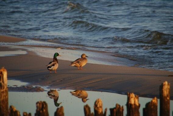 Plaża w Karwi