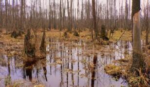 10 najpiękniejszych puszczy i lasów Polski