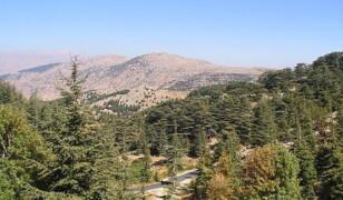 Rezerwat cedrów Al Shouf