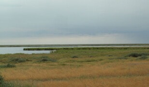 Rezerwat Naturalny Korgalzhyn