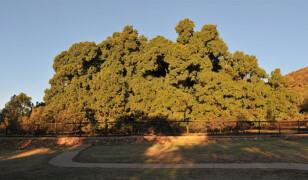 Rezerwat przyrody Wonderboom