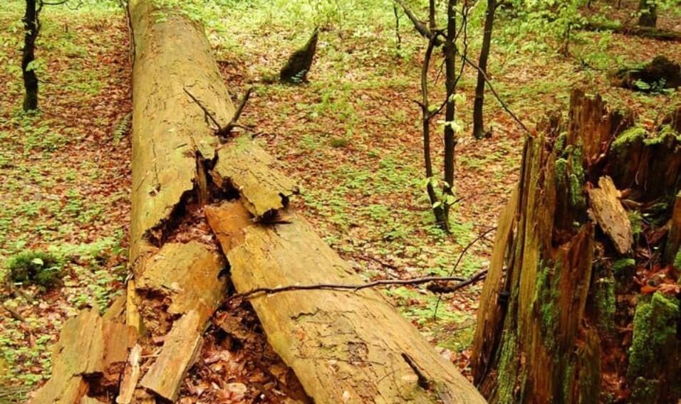 6 najstarszych parków w Polsce
