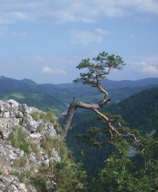 Sokolica (Pieniny)