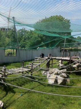 Szympansy w Ogrodzie Zoologicznym w Bratysławie