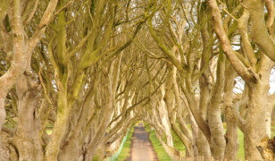 9 niezwykłych tuneli z drzew