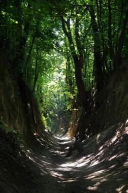 Wąwóz Królowej Jadwigi w Sandomierzu