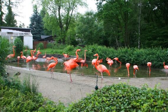 Zoo w Ostrawie